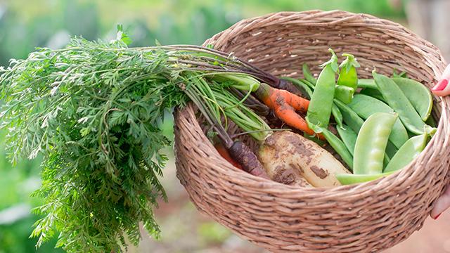 ירקות אורגניים מהחווה
