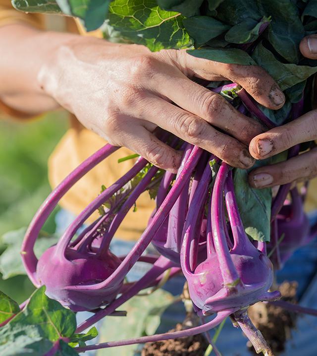ירקות אורגנים